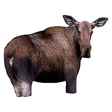 Montana Decoy - Moose II Decoy