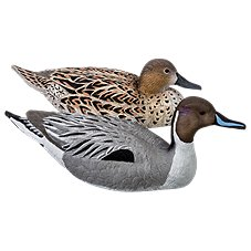 RedHead Reality Series Pintail Decoys