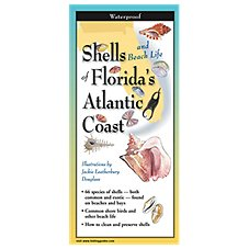 Shells and Beach Life of Florida's Atlantic Coast Laminated Folding Guide by by Jackie Leatherbury Douglass
