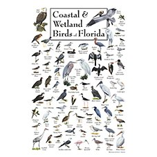 Coastal & Wetland Birds of Florida Poster by Ernest C. Simmons