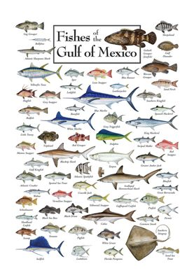 Fishes of the gulf of mexico regional fish poster bass pro shops