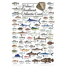 Fishes of the Southeast Atlantic Coast Regional Fish Poster