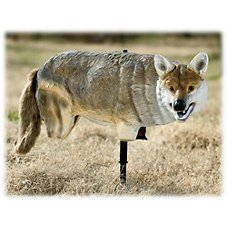 Lucky Duck Yote' Coyote Decoy Image