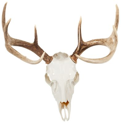 Mountain Mike's Reproductions Skull Master Antler Kit