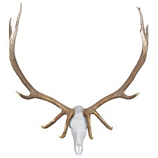 Mountain Mike's Skull Master Elk Kit