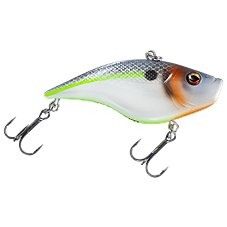 Sexier Shad