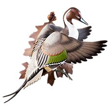 Wild Wings Flying Pintail Wall-Mount Decoy Sculpture by Sam Nottleman