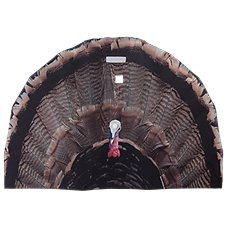 Turkey Fan Turkey Decoy
