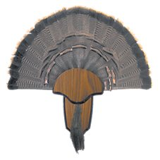 Hunter's Specialties Turkey Tail and Beard Mount Kit